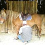 franco sella il cavallo