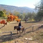 lezione cavallo toscana