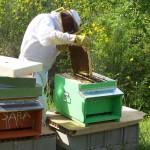 preparazione miele biologico