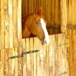 agriturismo con cavalli in toscana